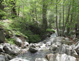 Stream in lower Icehouse Canyon