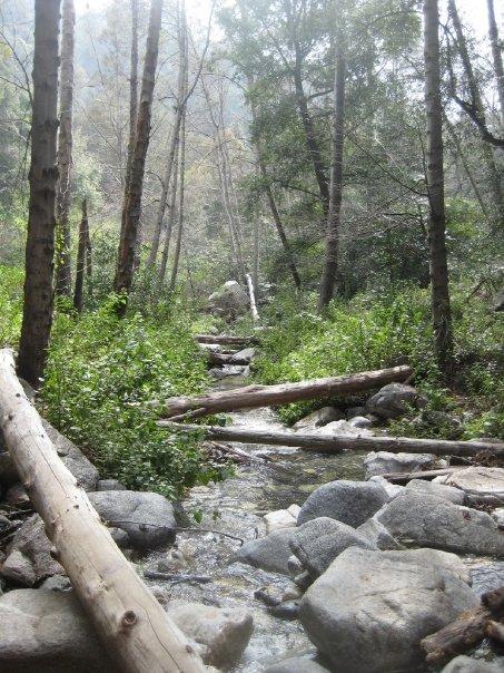 Crossing Big Santa Anita Creek en route to Sturtevant