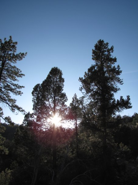 Dusk on the Cougar Crest Trail