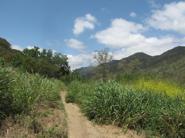 Greenery in Zuma Canyon, Santa Monica Mountains, Malibu, CA
