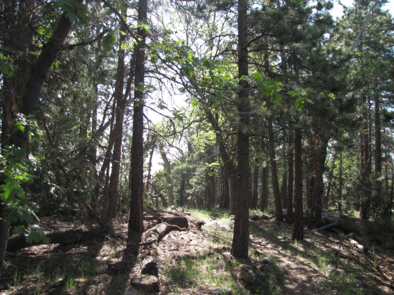 Ponderosa Whispering Pines Nature Trail