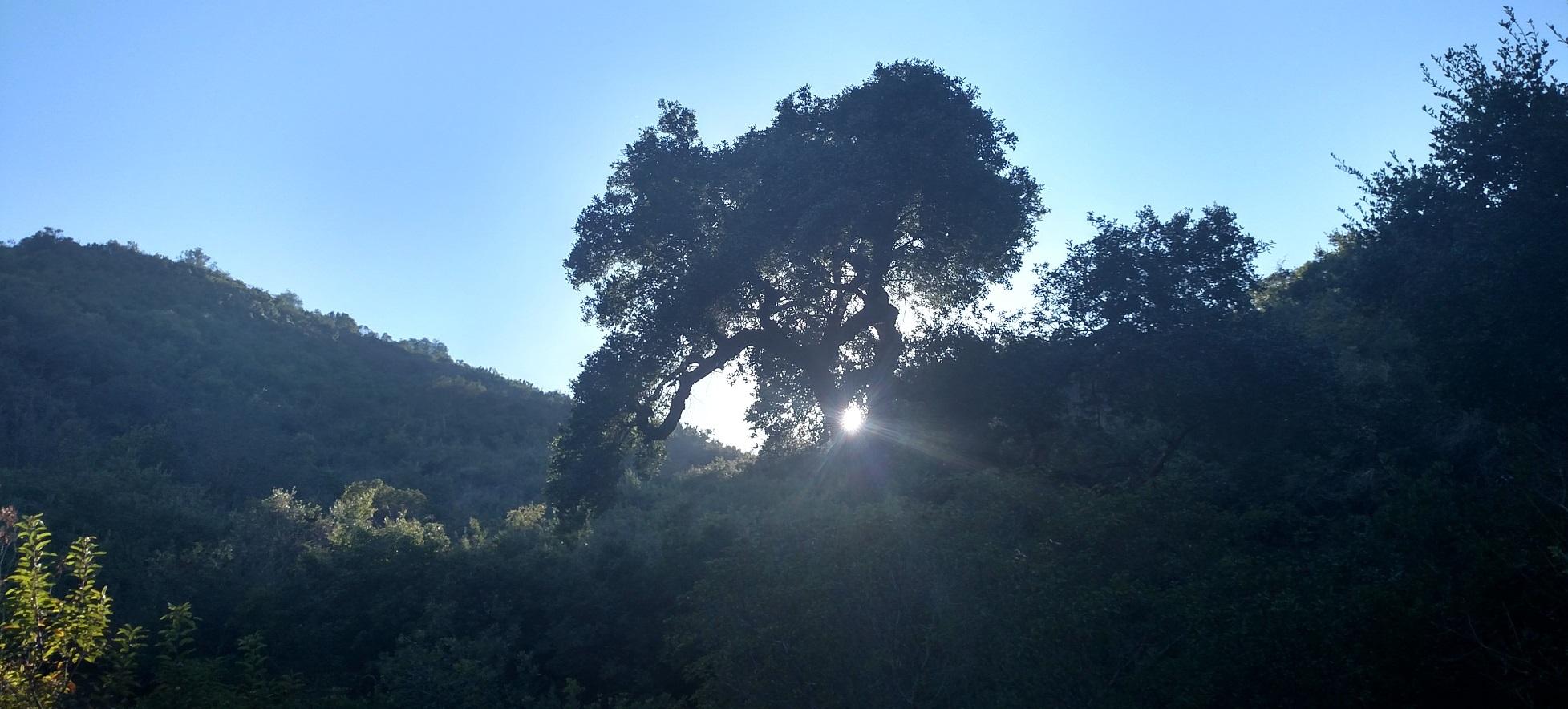 Laguna Coast Wilderness Park, Orange County