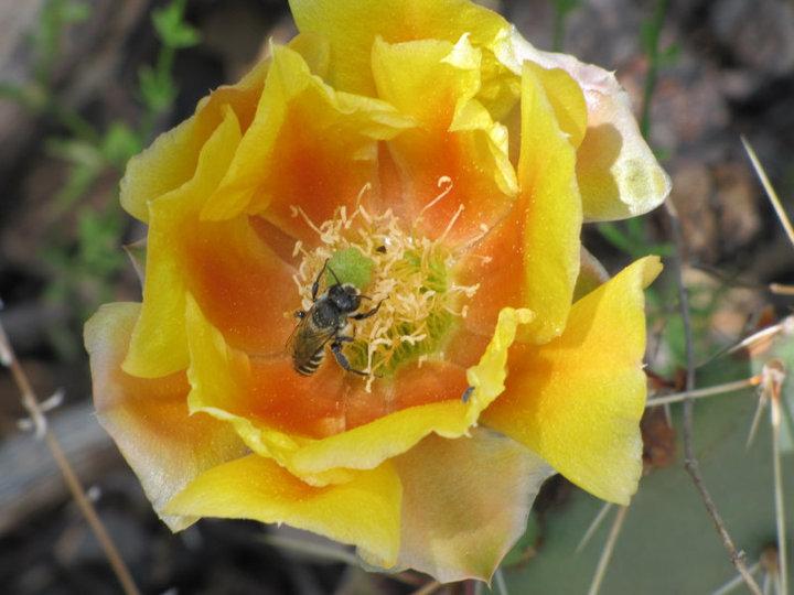 Momyer Trail Cactus Flower