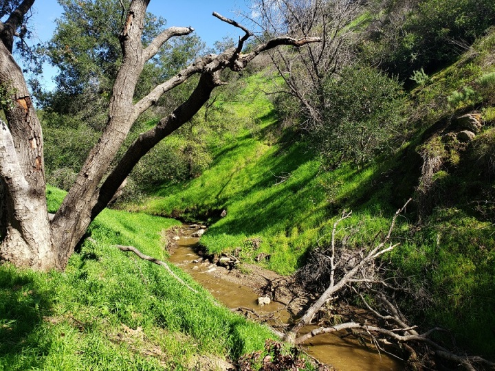 Brush Canyon, Griffith Park, CA
