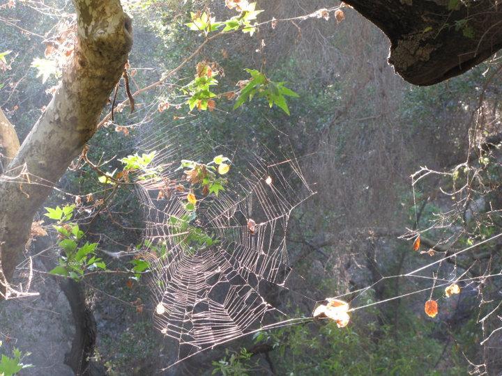 Spider web in Santa Ynez Canyon