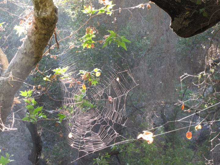 Spider web in Santa Ynez Canyon