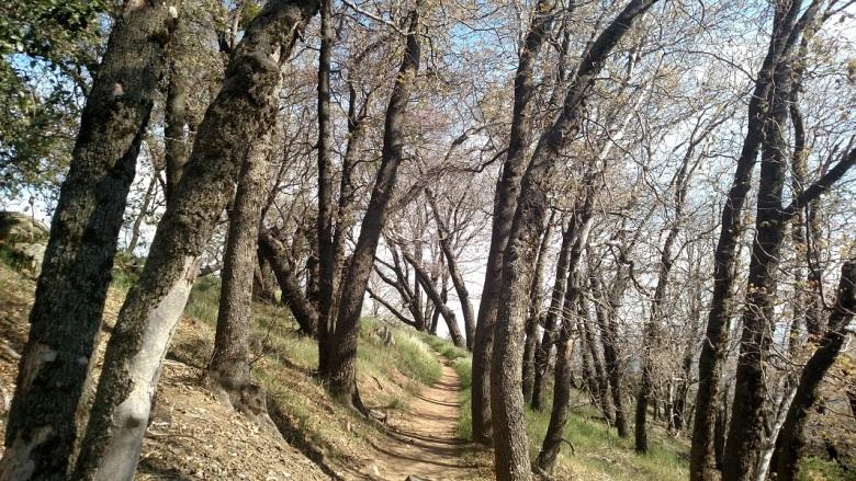 Volcan Mountain Wilderness Preserve, Julian, CA