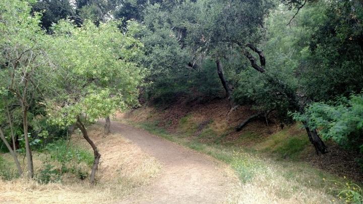 Cadman Trail, Griffith Park, CA