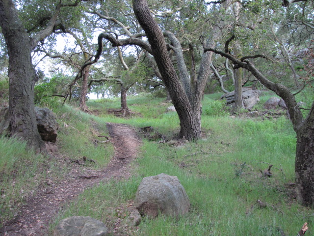 Oak woodlands, Charmlee Natural Area, Malibu, CA