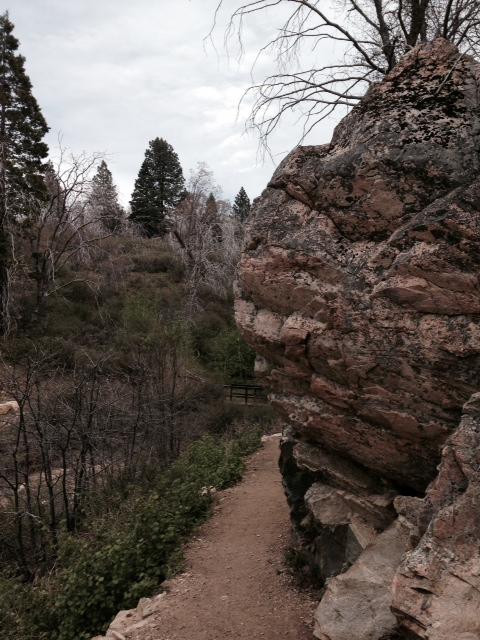 Geology and pines, Heaps Peak Arboretum