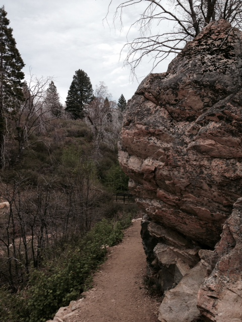 Geology and pines, Heaps Peak Arboretum