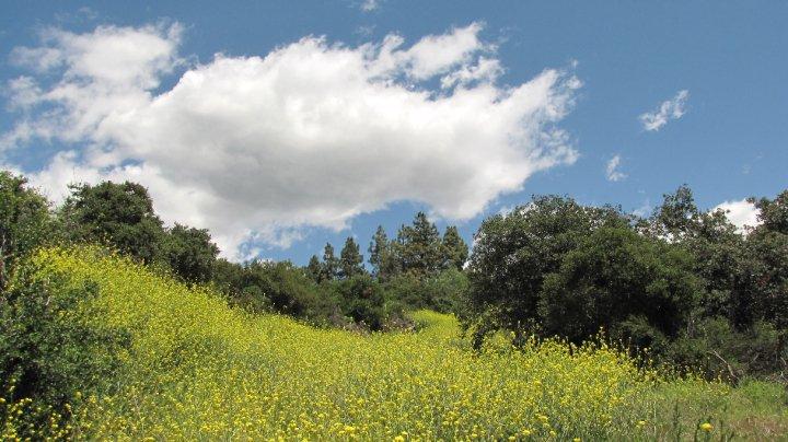 Marshall Canyon Flowers