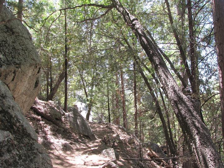 Maxwell Trail Woodlands