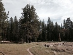 0:26 - Heading through the meadow, starting the return to the trailhead