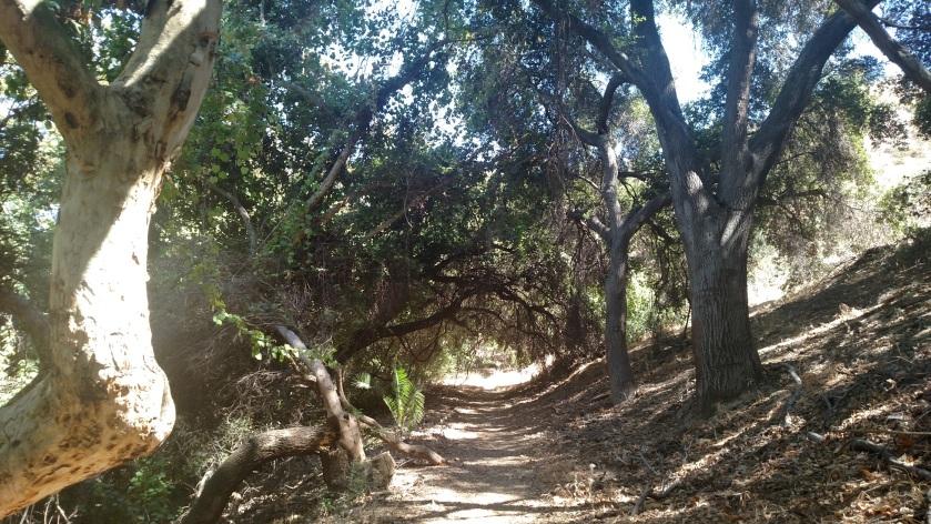 Dark Canyon, Puente Hills, CA