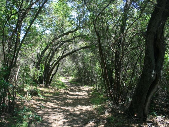 Oak woodlands, Backbone Trail, Upper Solstice Canyon, Santa Monica Mountains, Malibu, CA