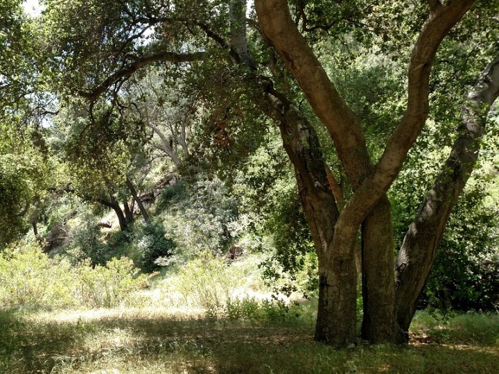 Claremont Hills Wilderness Park, Claremont, CA