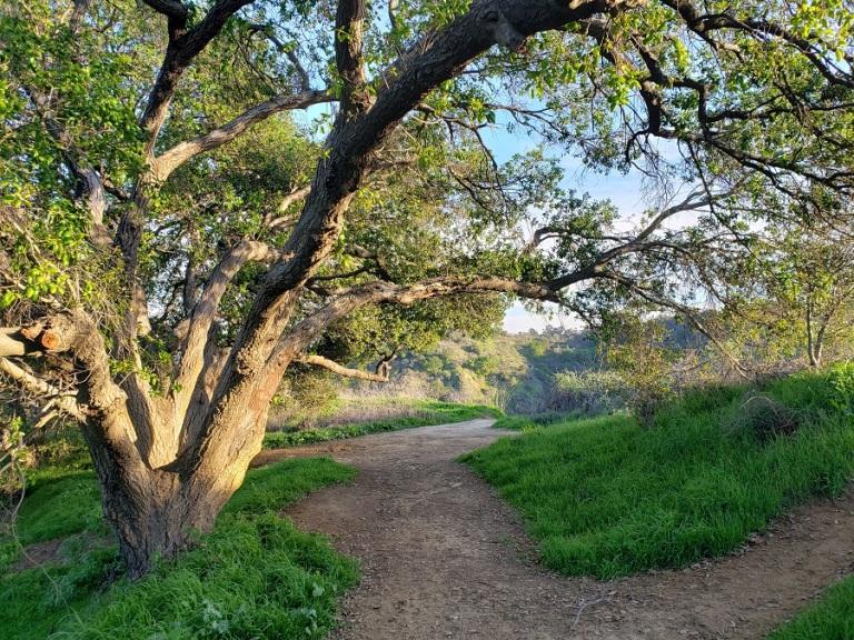 Ahwingna Trail, Puente Hills, CA
