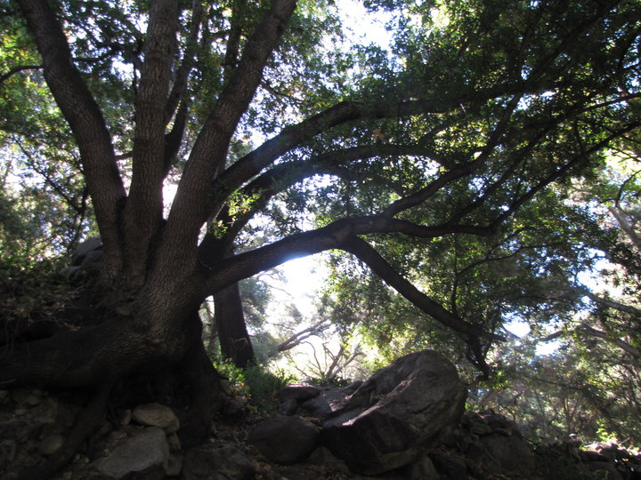 First Water Trail to Hermit Falls, Angeles National Forest