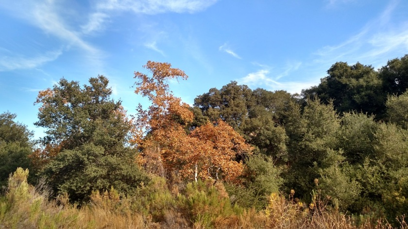 East Canyon, Santa Clarita, CA