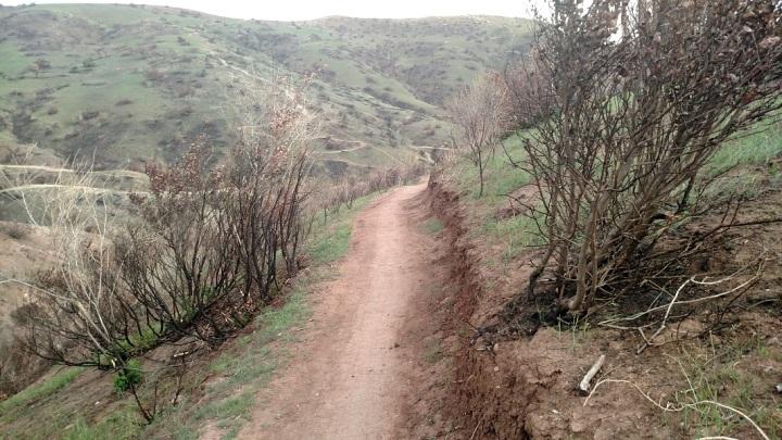 Bumble Bee Trail, Santiago Oaks Regional Park