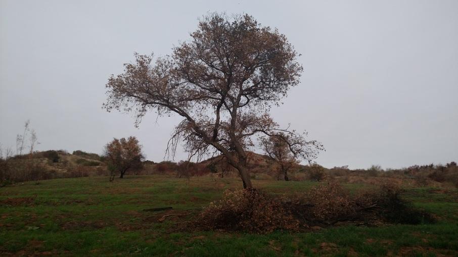Wilderness Trail, Santiago Oaks Regional Park