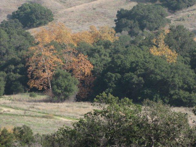 Anaheim Hills Trail, Orange County, CA