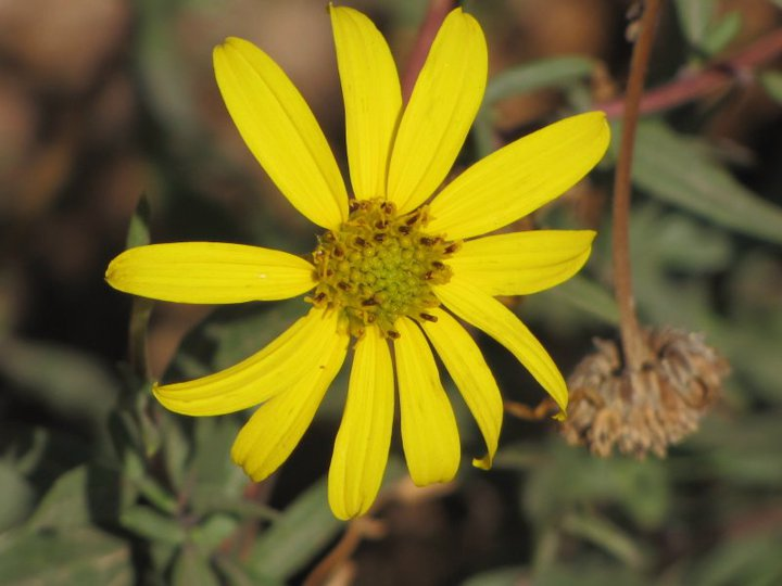 Bumble Bee Trail, Santiago Oaks Regional Park, CA