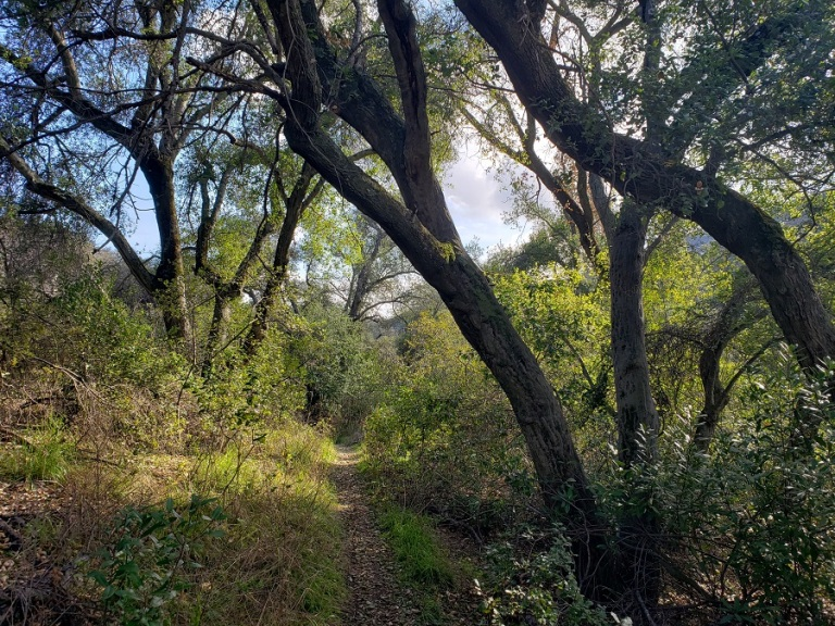 Chiquito Trail, Cleveland National Forest