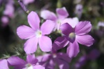 0:48 - Prickly Phlox flowers on the side of the trail (times are approximate)