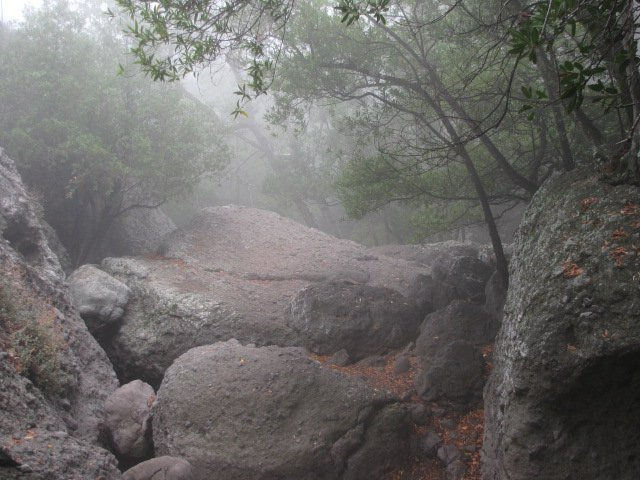 Mist on the Grotto Trail