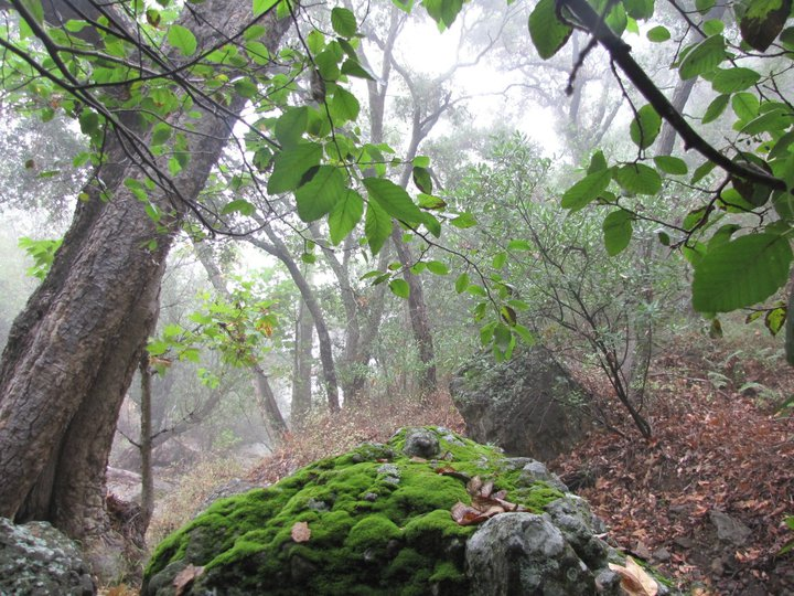 Moss and oaks on the Grotto Trail