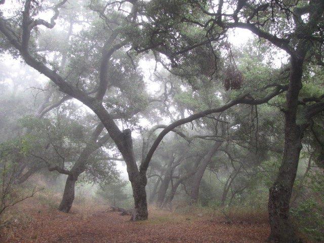 Grotto Trail, Santa Monica Mountains
