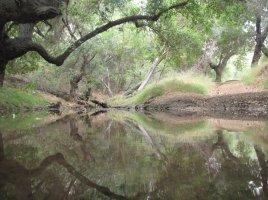 Stream crossing, Oak Canyon Park