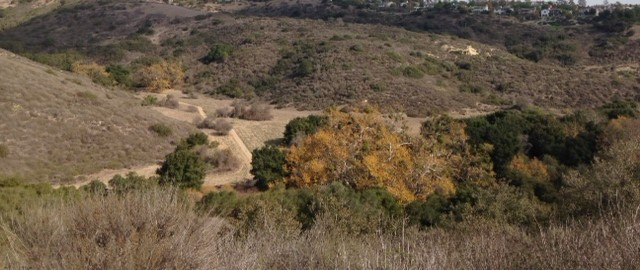 Looking down into Wood Canyon from the Rock It Trail