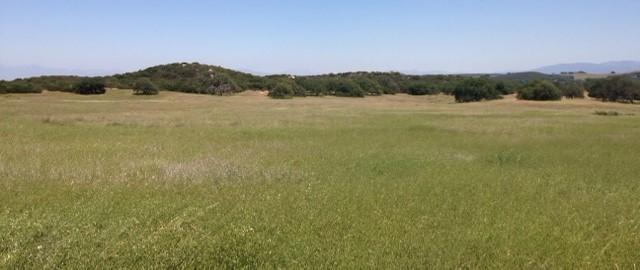 Sylvan Meadows