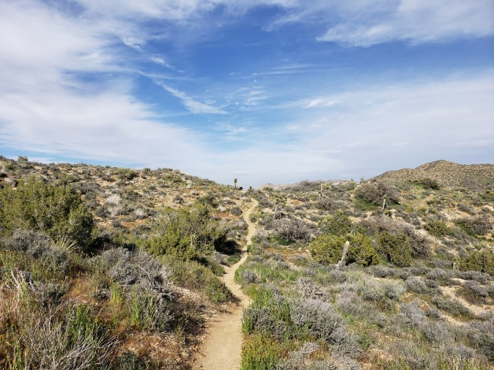 West Side Loop, Joshua Tree National Park