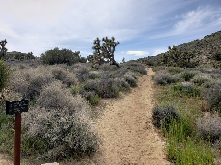 West Side Loop Trail, Joshua Tree National Park