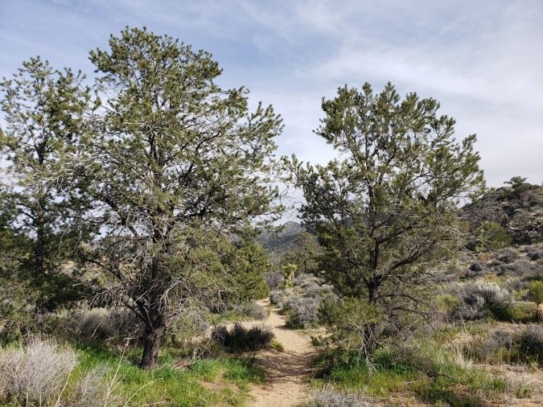 West Side Loop, Joshua Tree National Park