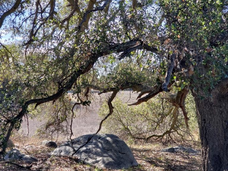 Vista Grande Trail, Santa Rosa Plateau Ecological Reserve
