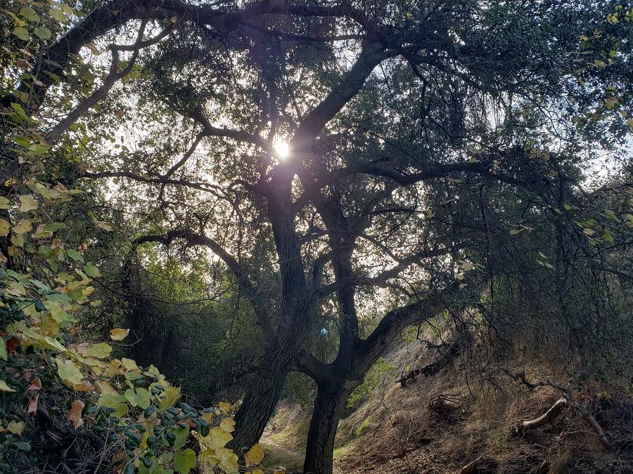 Oak Tree Loop Trail, Wildwood Canyon Park, Yucaipa, CA