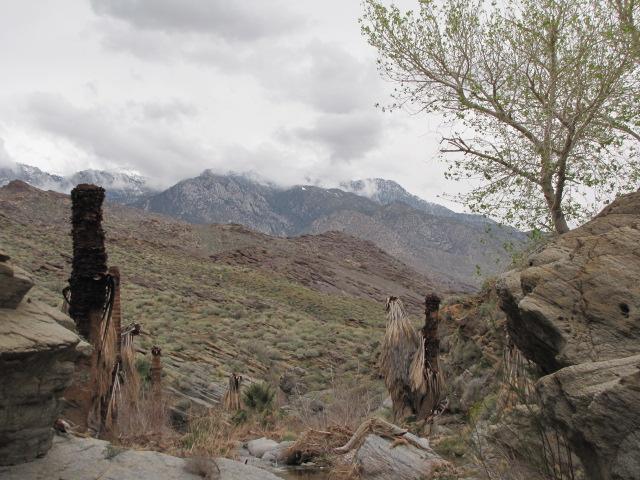 Stone Pools trail, Palm Springs
