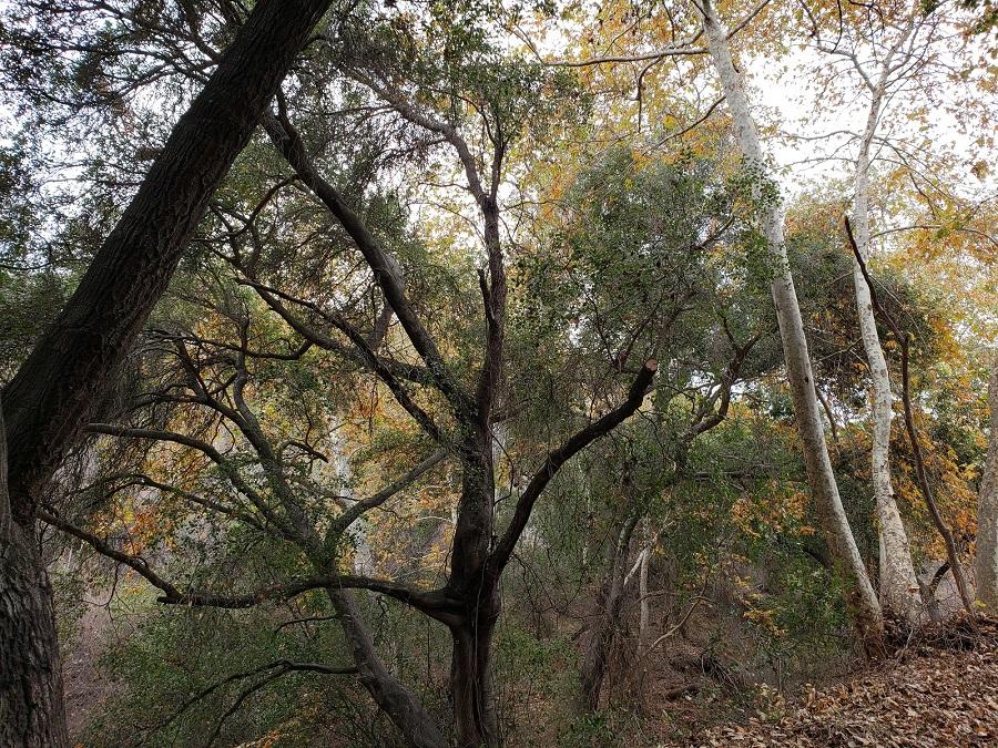 Turnbull Canyon, Whittier, CA