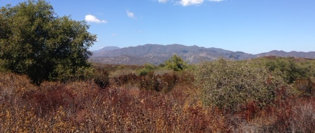 Santa Ana Mountains from the Bear Ridge Trail, Cleveland National Forest