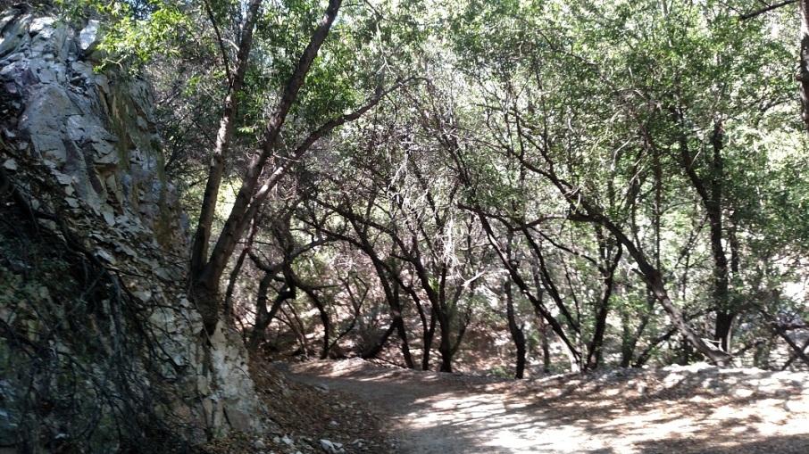 Santa Anita Ridge, San Olene Fire Road