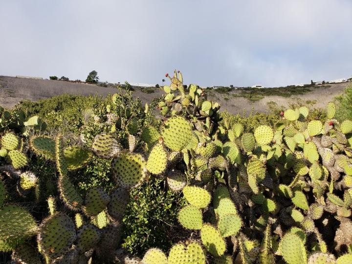 Barkentine Trail, Three Sisters Reserve, Rancho Palos Verdes, CA