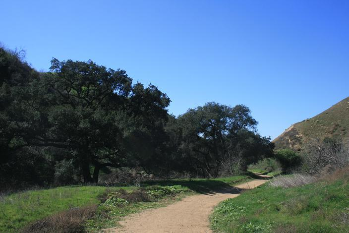 Oaks in Telegraph Canyon, Chino Hills State Park