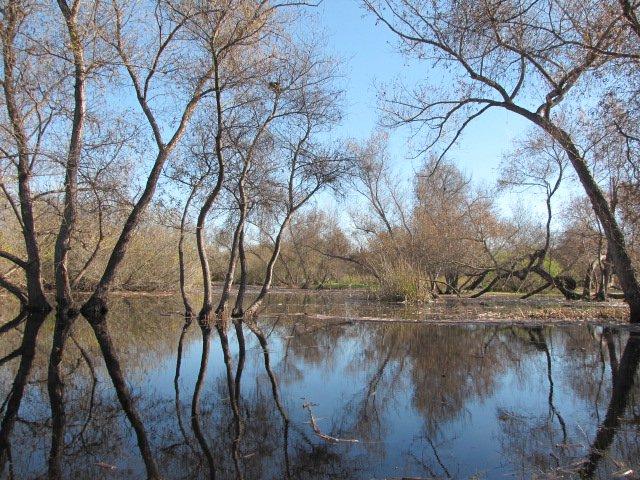 Wetlands in Madrona Marsh