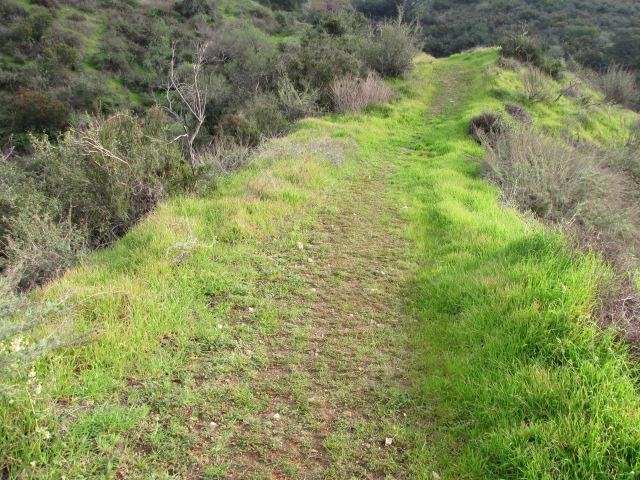 Descending the Wren Meacham Trail