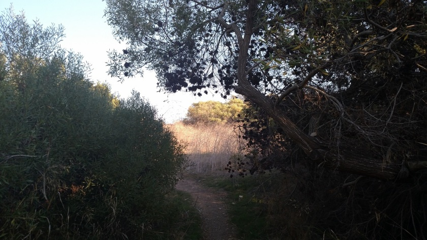 Gary's Gulch Trail, Filiorum Reserve